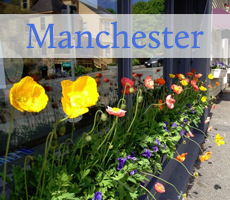 Manchester Tulips
