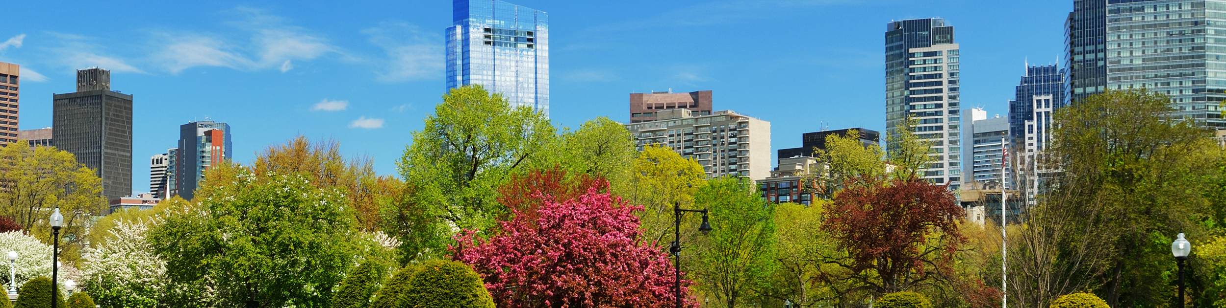 Boston skyline shown above beautiful Spring bushes