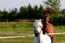 two horses on a farm