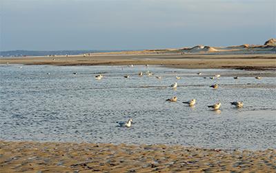 Beautiful view of Crane Beach, Ipswich.