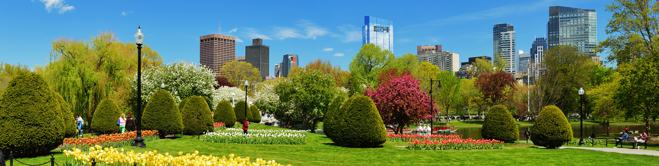 spring image - gorgeous spring flowers and shrubs with Boston skyline in the background
