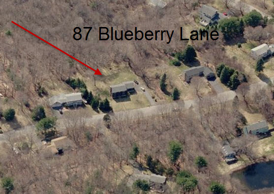 87Blueberry