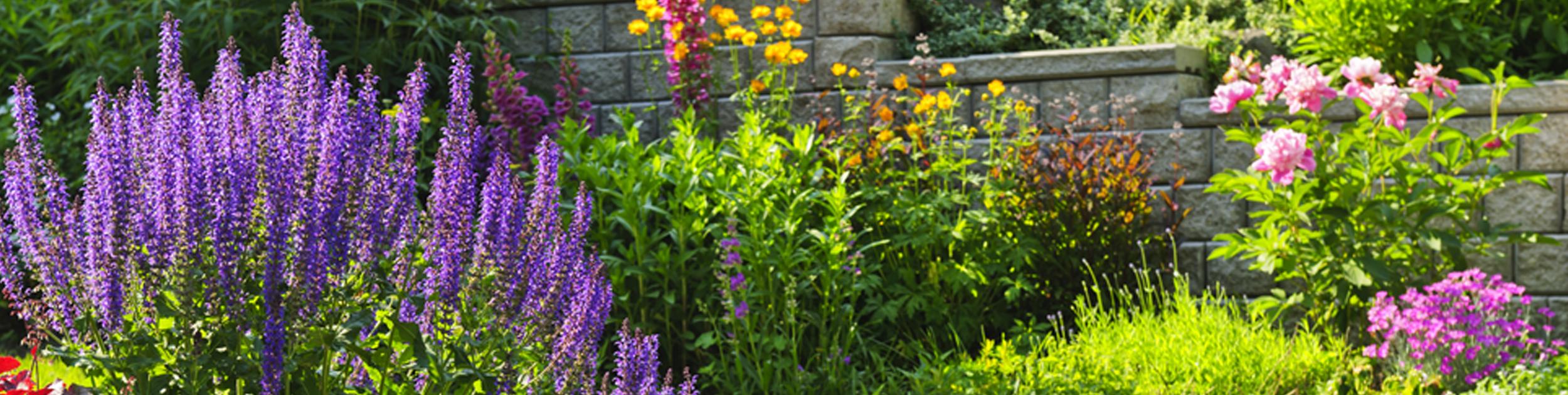 beautiful colorful summer flower garden