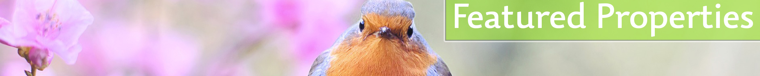 Spring image of red breasted robin looking at you and the words Featured Properties