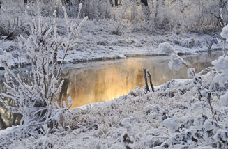 Picture of Tranquil Winterscape Beside Pond