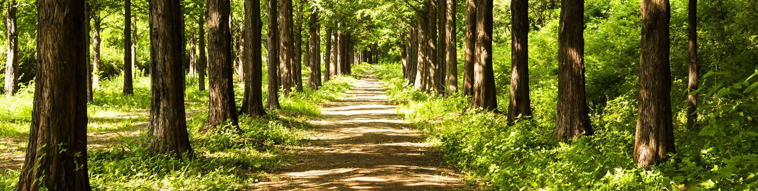 walking path in the woods surrounded by trees with sunshine showing through